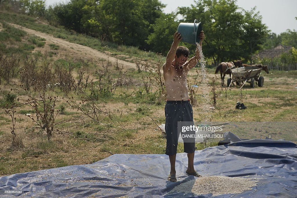 A farmer pour beans in the wind to clean them in a field next to Garliciu village on August 13, 2014. Forecasters have issued an alert announcing temperatures of up to 38 degrees Celsius.