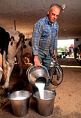 Farmer pours fresh milk into buckets