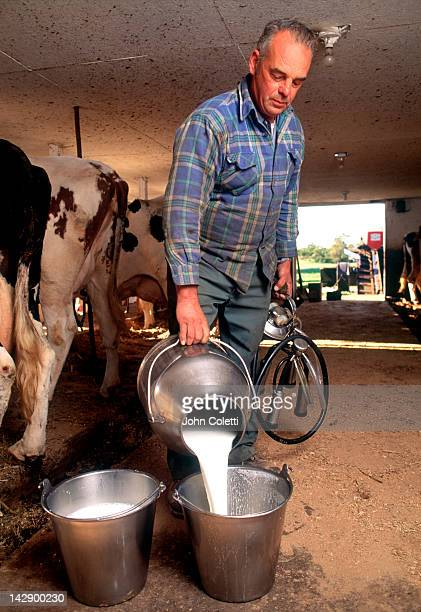 Farmer pours fresh milk into buckets