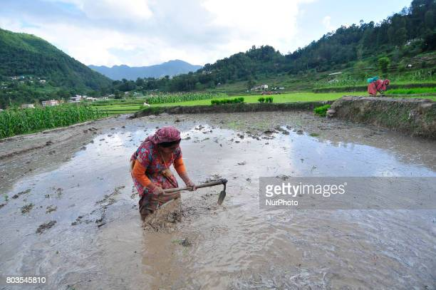 A farmer prepares the ground for Rice Planntation during the celebration of National Paddy Day quotASHAD 15quot at Chhampi Patan Nepal on Thursday...