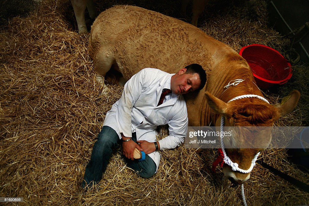 A farmer rests in the cattle shed at the Royal Highland Show June 19, 2008 in Edinburgh, Scotland. The event is the biggest in the Scottish farming calendar with it expecting over 100,000 visitors over the next four day's.