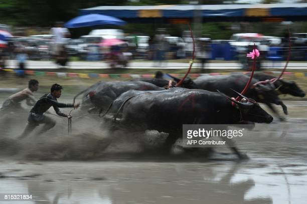 TOPSHOT A farmer rides on the back of a wooden plough tied to a pair of racing buffaloes during the annual rice planting festival in Chonburi on July...