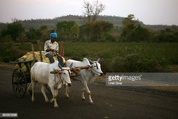 A farmer rides past a cotton field on April 2008 in the village of Sunna in the Vidarbha region of Maharashtra state India A wave of farmers'...