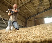 Farmer shoveling grain in barn, portrait