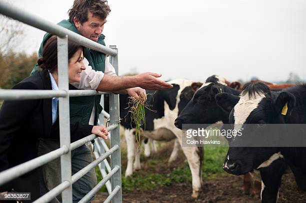farmer showing business woman cows