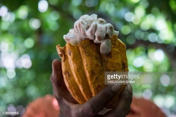 A farmer shows beans in a cocoa pod in Sao Felix do Xingu Para state northern Brazil on August 7 2013 AFP PHOTO / YASUYOSHI CHIBA