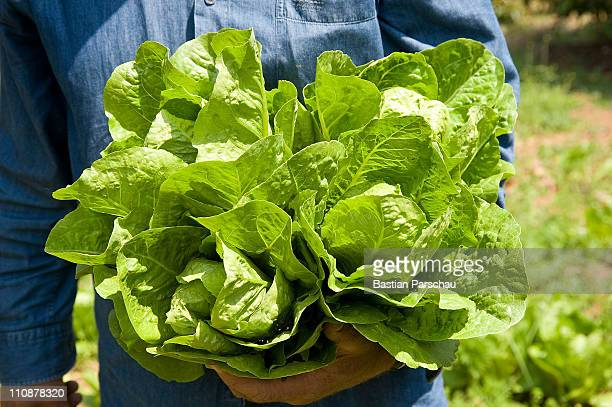 A farmer shows his pride harvest the green salad into the kamera on April 26 2010 in Heraklion Greece
