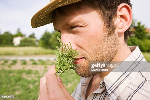 Farmer smelling rosemary, close-up