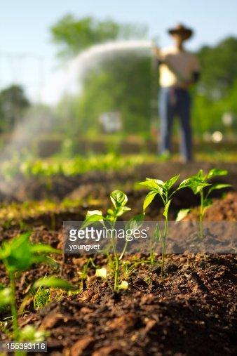 Farmer spraying his garden