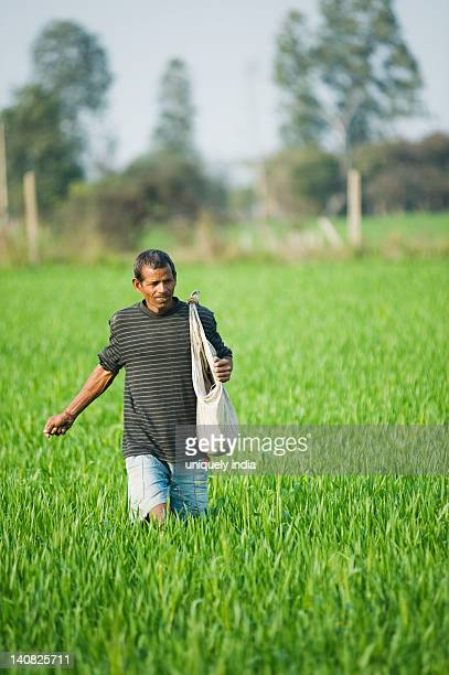 Farmer spreading fertilizer in a field, Farrukh Nagar, Gurgaon, Haryana, India