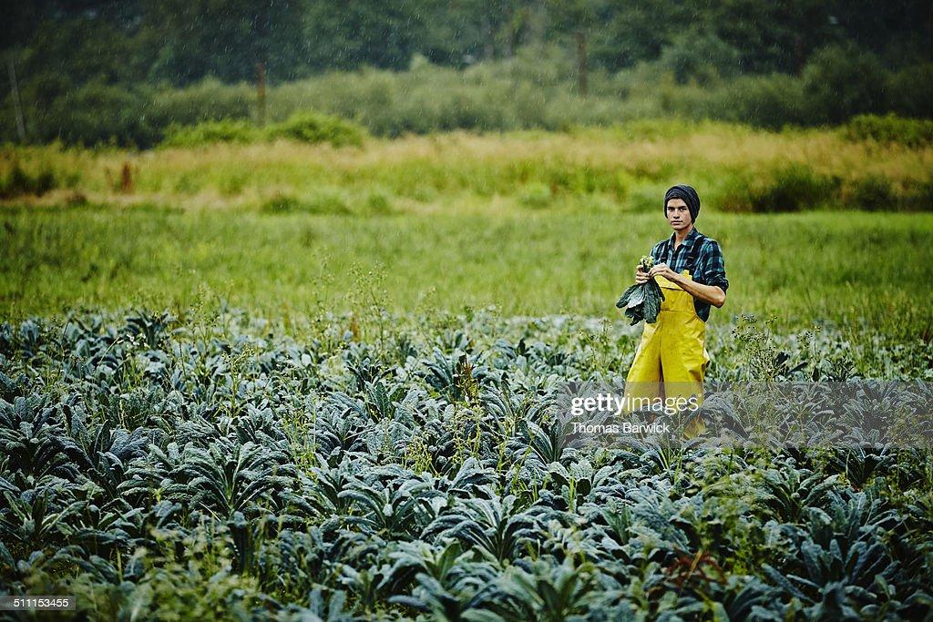 Farmer standing in field harvesting organic kale
