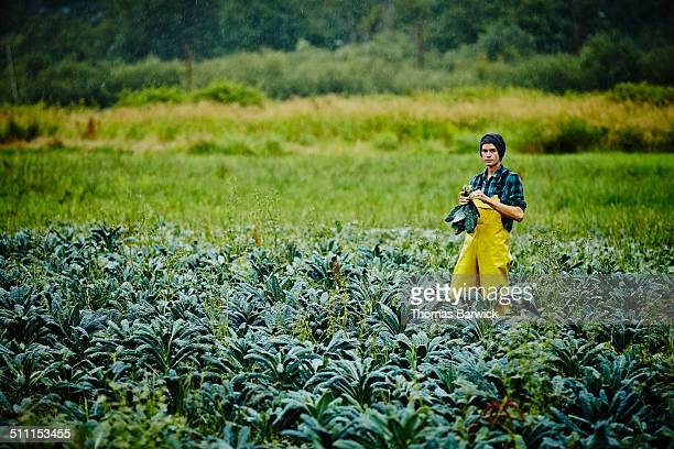 Farmer standing in field harvesting organic kale