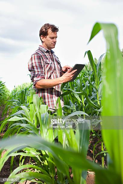 Farmer standing in field of crops using digital tablet