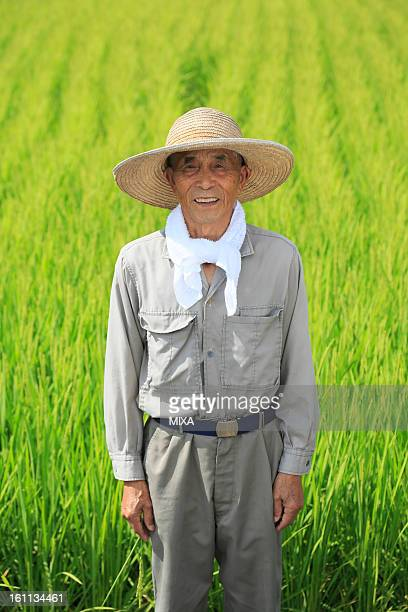 Farmer Standing in front or Rice Paddy in Summer