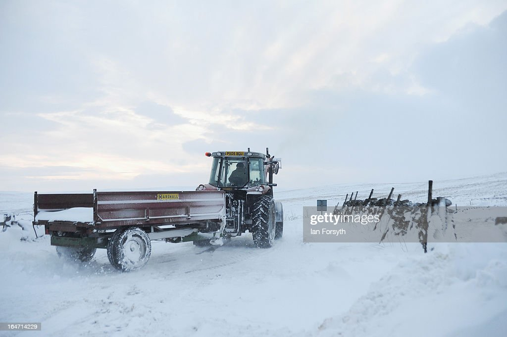 Farmer Stuart Buckle, 23, drives a tractor and trailor at his farm in the hamlet of Barras during heavy snow on March 27, 2013 near Kirkby Stephen, Cumbria, England. Stuart, 23, runs Bleathgill Farm with his father Wilf and as heavy snow continues to fall, extra effort is needed to look after and protect their Swaledale sheep from the cold. Across the UK, farmers are battling to save livestock after heavy snow and freezing temperatures has left thousands of sheep and cattle stuck in the fields with no access to food and fresh water.