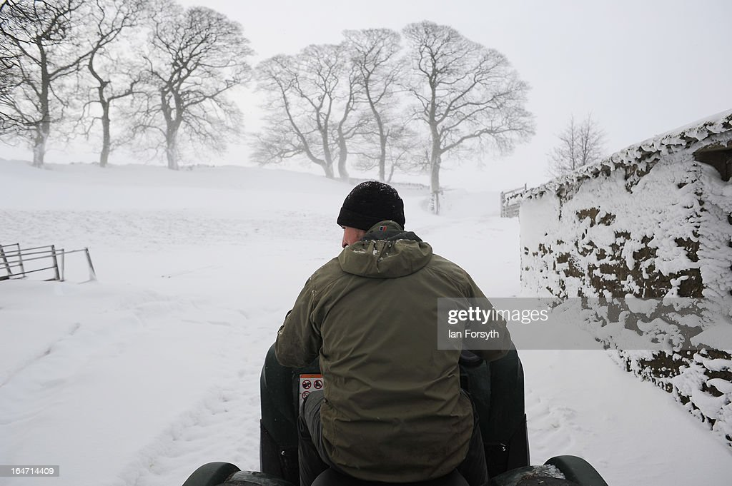 Farmer Stuart Buckle rides on a quadbike to give his sheep their morning feed on his farm in the hamlet of Barras during heavy snow on March 27, 2013 near Kirkby Stephen, Cumbria, England. Stuart, 23, runs Bleathgill Farm with his father Wilf and as heavy snow continues to fall, extra effort is needed to look after and protect their Swaledale sheep from the cold. Across the UK, farmers are battling to save livestock after heavy snow and freezing temperatures has left thousands of sheep and cattle stuck in the fields with no access to food and fresh water.