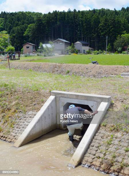 A farmer takes shelter in an irrigation waterway during an evacuation drill in Tsubame Niigata Prefecture on June 12 in the wake of North Korea's...