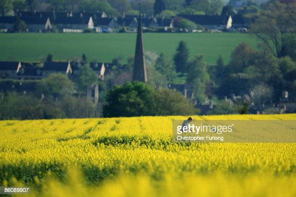 A farmer tends to his blooming rape seed field in the hills above Burford in the Cotswolds on April 21 2009 in Burford United Kingdom The...