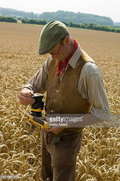 Farmer testing in field of wheat