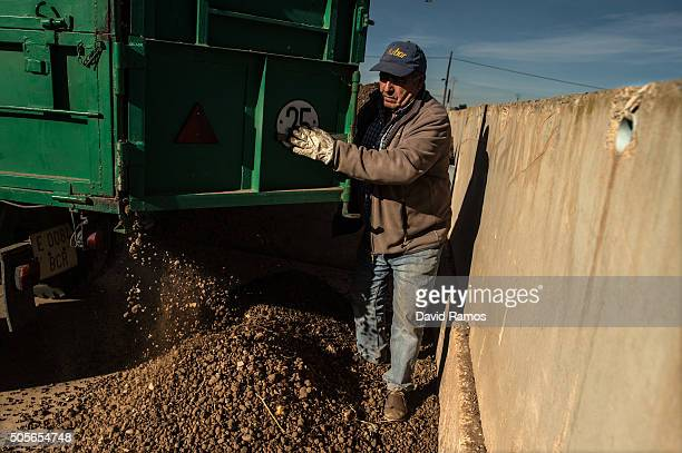 A farmer unloads 'chufas' to be washed on January 18 2016 in Valencia Spain AAccording to the Valencia's Tiger Nut Regulatory Council the cultivation...