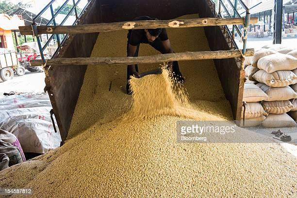 A farmer unloads soybeans at a grain market in Burhanpur Madhya Pradesh India on Friday Oct 19 2012 Global soybean consumption will drop about 3...