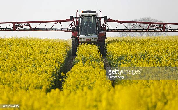A farmer uses a Bateman crop sprayer produced by Bateman Engineering Ltd to spray a field of rapeseed crops in Basildon UK on Wednesday April 2 2014...