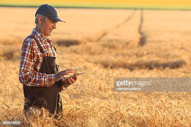 Farmer using digital tablet on wheat field