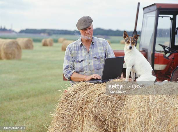 Farmer using laptop in field, smoking cigar, Rotterdam