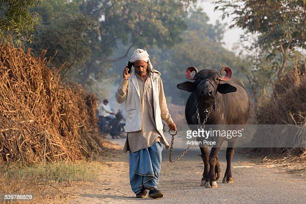 Farmer using smartphone