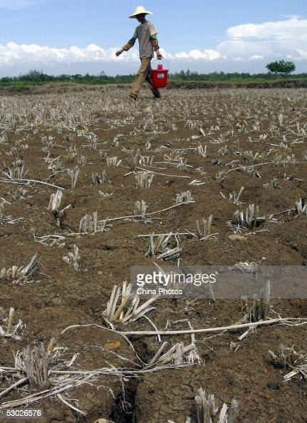 A farmer walks across a dried field on June 2 2005 in Leizhou of western Guangdong Province southern China According to Guangdong Provincial...