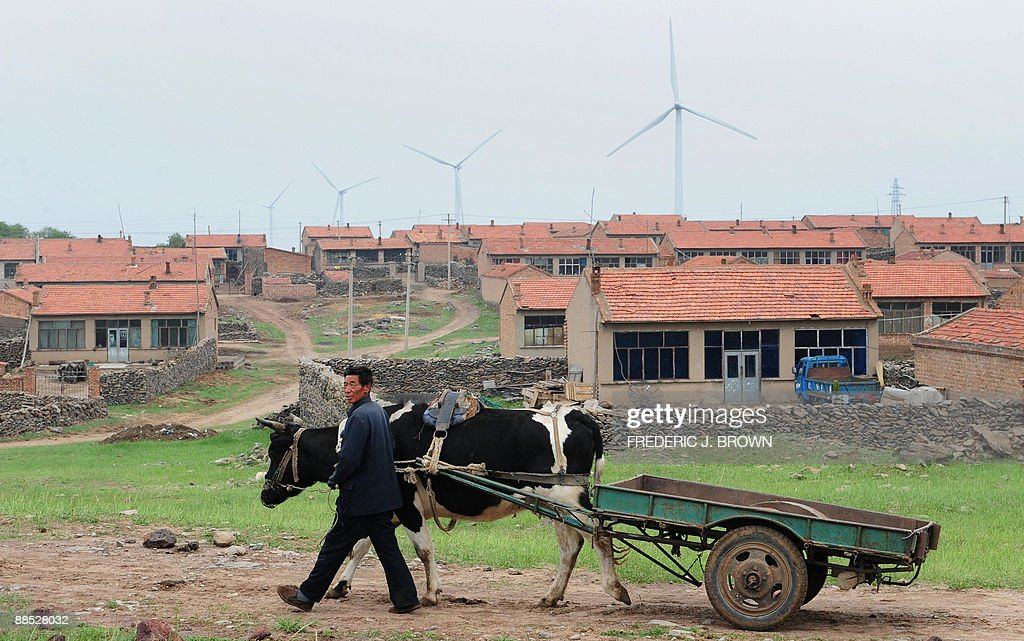 A farmer walks his cow past village housing near a wind power plant in Zhangbei northwest of Beijing near Inner Mongolia on June 16 in northern...