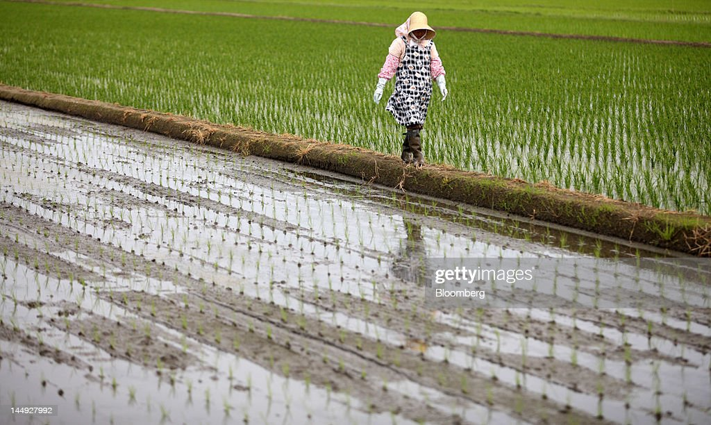 A farmer walks through a rice paddy field in Katori City, Chiba Prefecture, Japan, on Friday, May 18, 2012. Japan produced 7.7 million tons of rice in the 2010-2011 marketing year, becoming the world's 10th-biggest grower, according to U.S. Department of Agriculture's website. Photographer: Tomohiro Ohsumi/Bloomberg via Getty Images