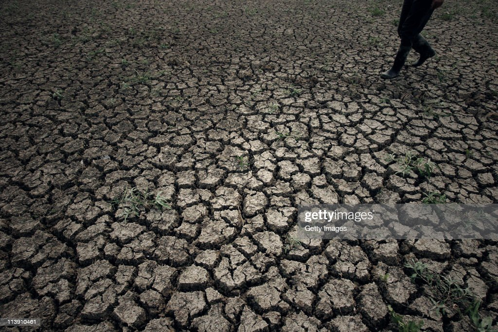 A farmer walks through a tried field on May 9, 2011 in Wuhan, Hubei Province of China. Farmers in most parts of central and southern China are worried about the harvest after seeing one of the driest springs on previous records.