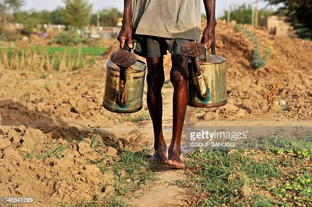 A farmer waters lettuces in a field on the outskirts of Niamey on May 27 2012 The African nation of Niger is frequently affected by food crises AFP...