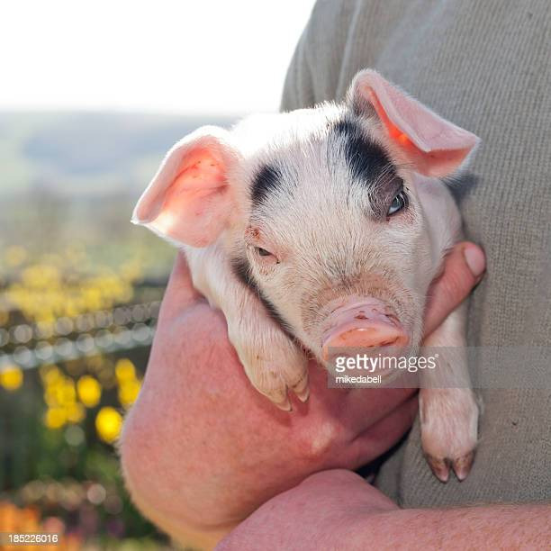 Farmer with a piglet
