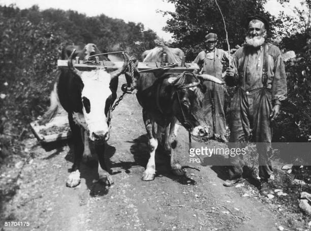 A farmer with a team of oxen in Grafton New York circa 1935