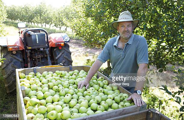 Farmer with apples in an orchard