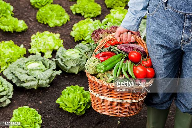 Farmer with basket full of vegetables