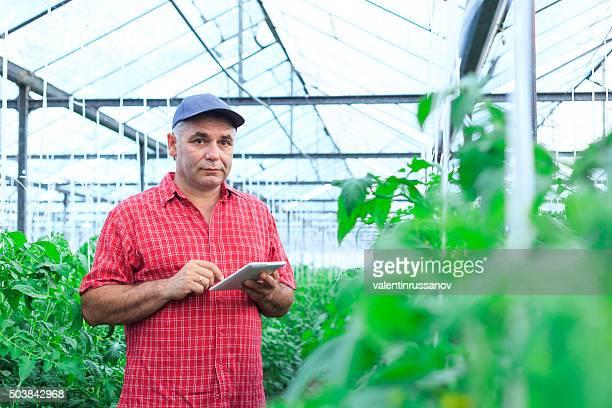 Landwirt mit digitalen Tablet im Gewächshaus