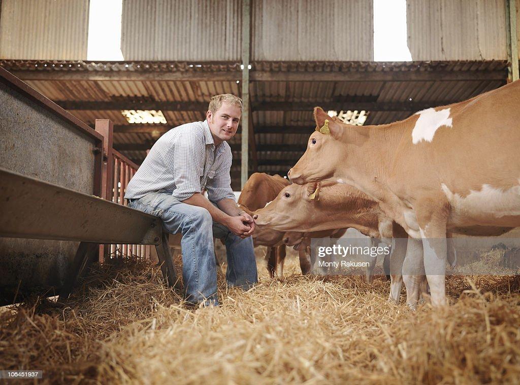 Farmer with Guernsey calves