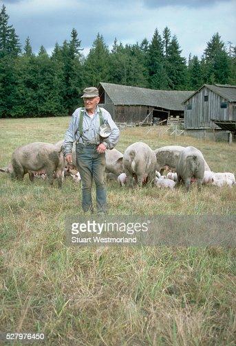 Farmer With Pigs in Sequim, Washington