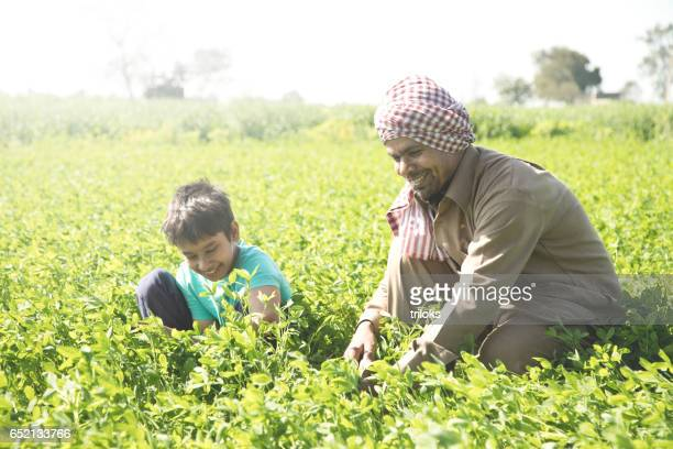 Farmer with son plucking crop in field