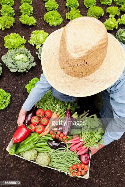 Agriculteur avec des légumes