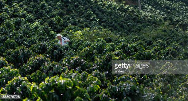 Farmer working at a coffee farm fumigating the crop