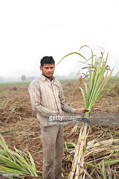 Farmer working in the Sugarcane field Portrait
