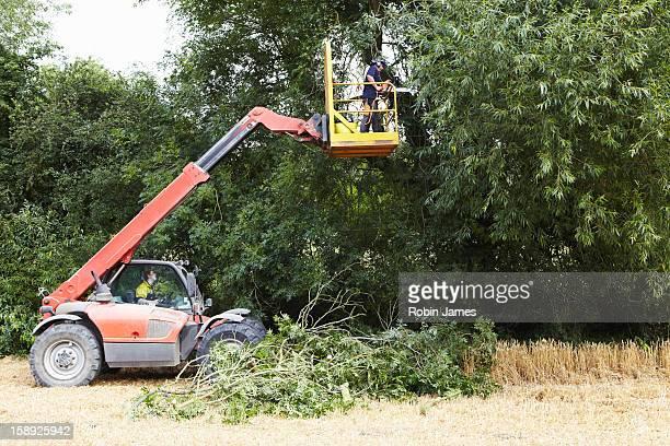 Farmer working on cherry picker