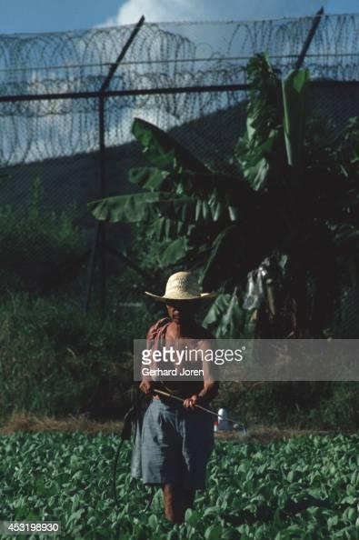 A farmer working on his land at the border between Hong Kong and China