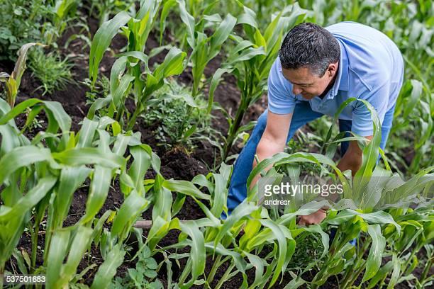 Farmer working on the crop