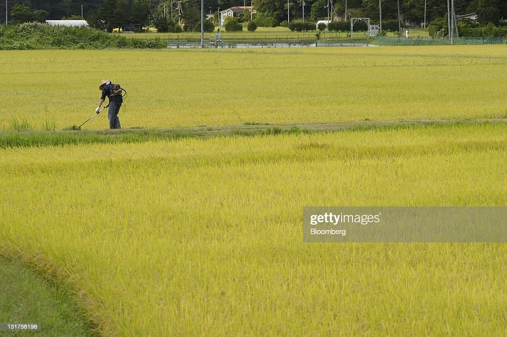 A farmer works in a rice paddy in Matsushima Town, Miyagi Prefecture, Japan, on Tuesday, Sept. 4, 2012. Japan's economy expanded in the second quarter at half the pace the government initially estimated, underscoring the risk of a contraction as Europe's debt crisis caps exports. Photographer: Akio Kon/Bloomberg via Getty Images