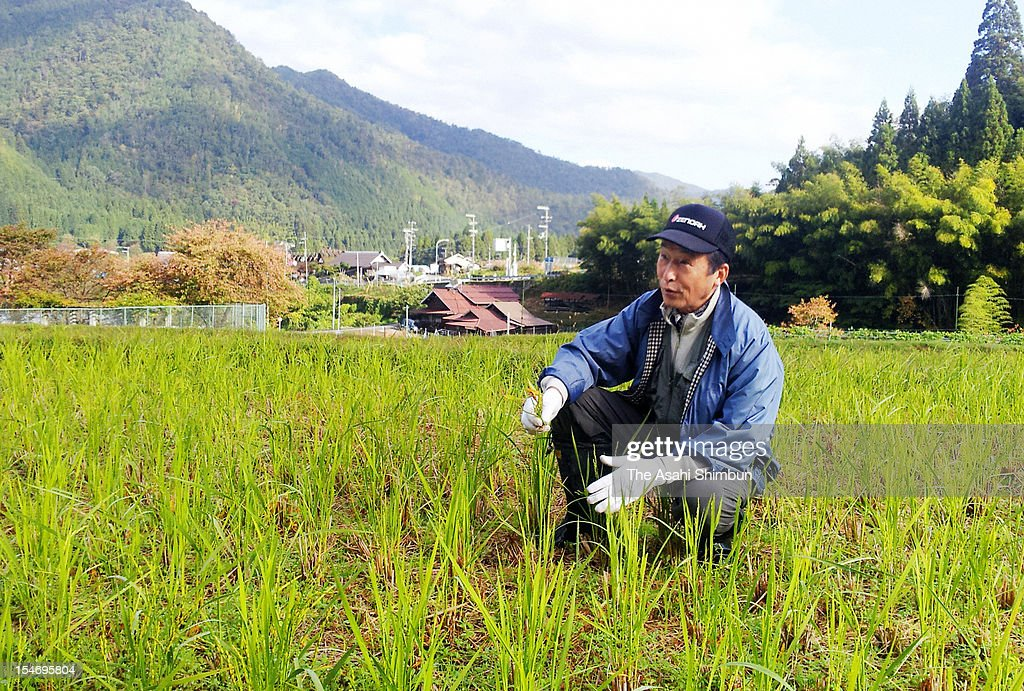 Farmer Yutaka Seguchi, (65) sits in his rice paddy located within 30-kilometer south from Kansai Electric Power Co., Oi Nuclear Power Plant on October 24, 2012 in Nantan, Kyoto, Japan. A forecast of the radiation released in another nuclear accident shows that at four plants, a 30-kilometer evacuation zone would be insufficient for public safety, and that more distant residents would need to flee their homes too.